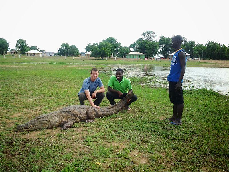 Paga Crocodile